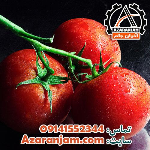 آموزش کشت گوجه فرنگی در گلخانه – نکات کشت هیدروپونیک گوجه فرنگی
