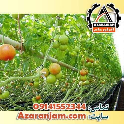 تجهیزات مورد نیاز کشت هیدروپونیک گوجه در گلخانه
