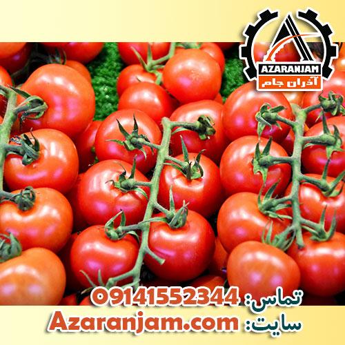کشت گوجه فرنگی در گلخانه